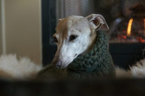 Сheap Large Dog Sweater - Post Thumbnail