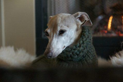 Сheap Large Dog Sweater - Post Thumbnail